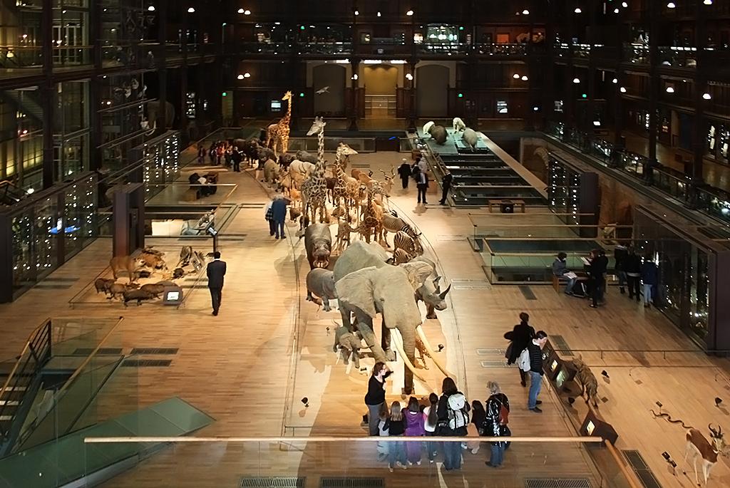 動物の進化を学ぶ!パリ国立自然史博物館「進化大陳列館」