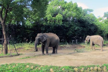 世界の動物旅行を体験!「よこはま動物園ズーラシア」