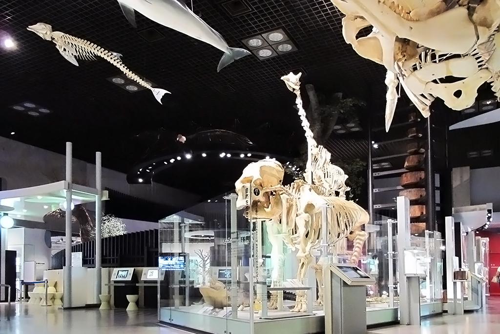 ゾウやキリン、ワニなどの骨格から動物のサイズを学ぶ