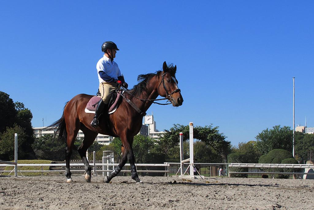 馬術競技の拠点となり、人と馬がふれあう「馬事公苑」