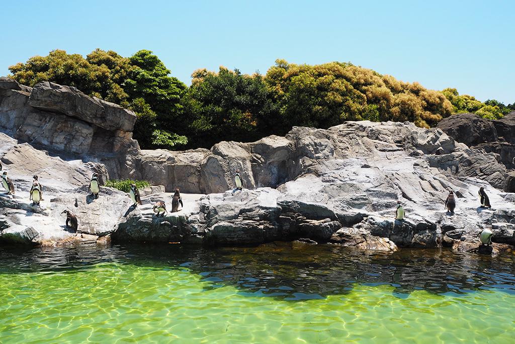 日本一「フンボルトペンギン」が多い屋外展示場