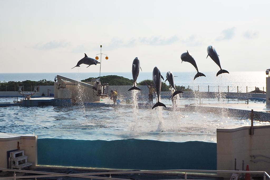 沖縄の海をバックに楽しめるイルカショー