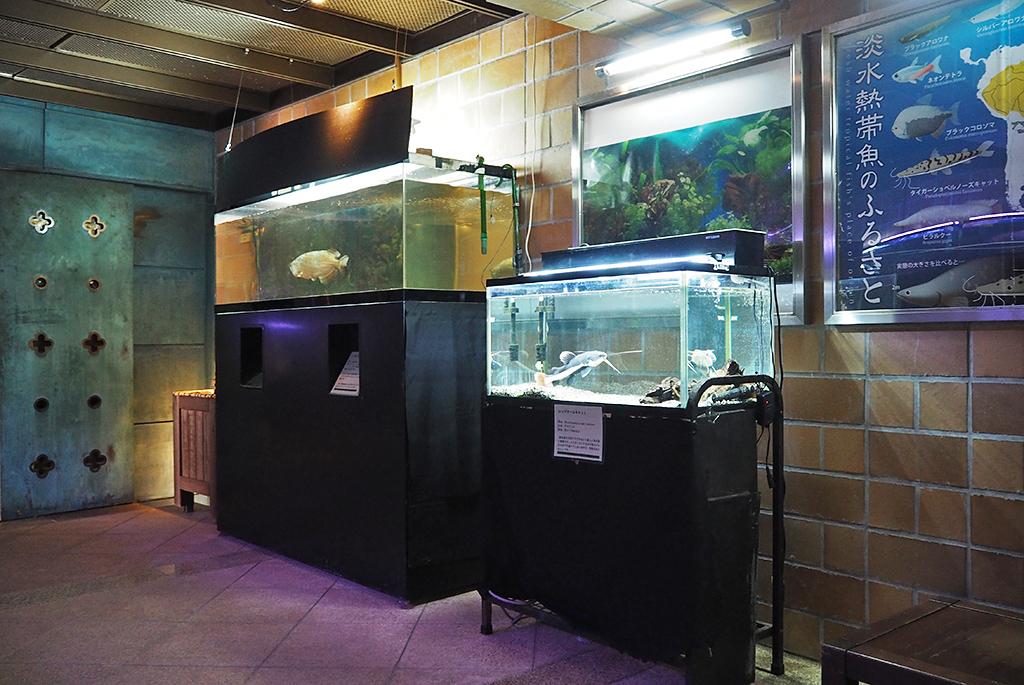 温室で展示している淡水熱帯魚