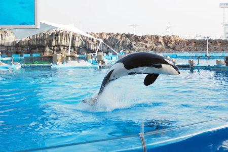 好奇心旺盛な海の王者、シャチに会える「名古屋港水族館」