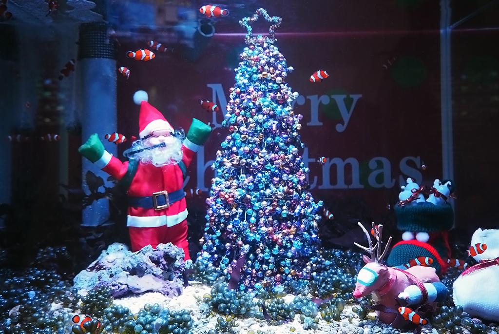カクレクマノミのクリスマス水槽