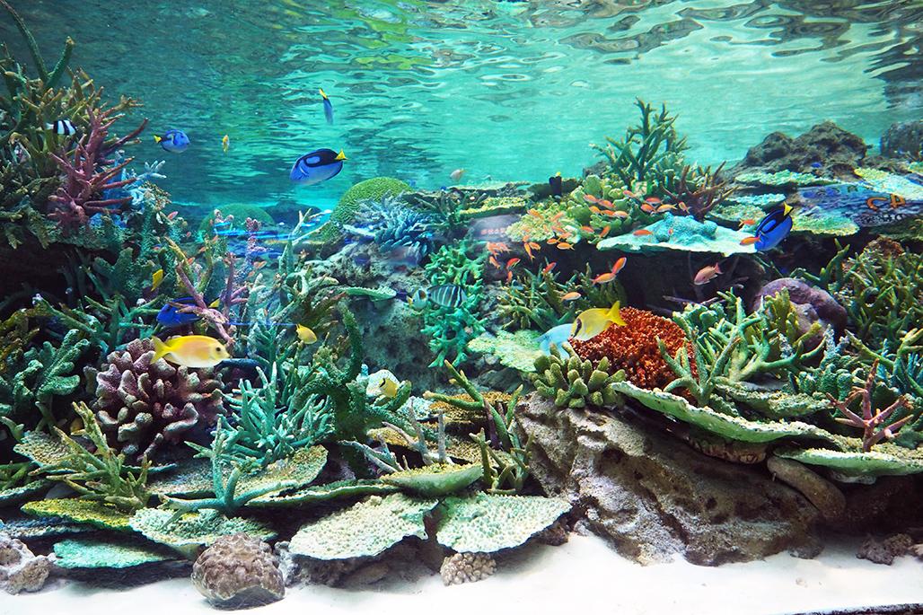 「サンゴ礁大水槽」の2階側面