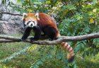 動物・昆虫が自然な姿でのびのびと暮らす「多摩動物公園」